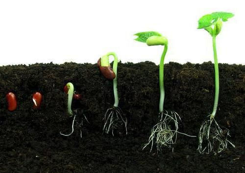 care este creșterea unui organism viu