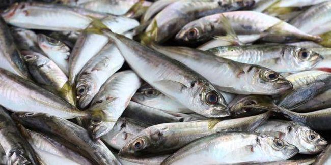 Pescuitul pe Marea Neagră de pe țărm și barcă. Combaterea pescuitului