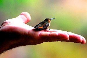 pasăre mică