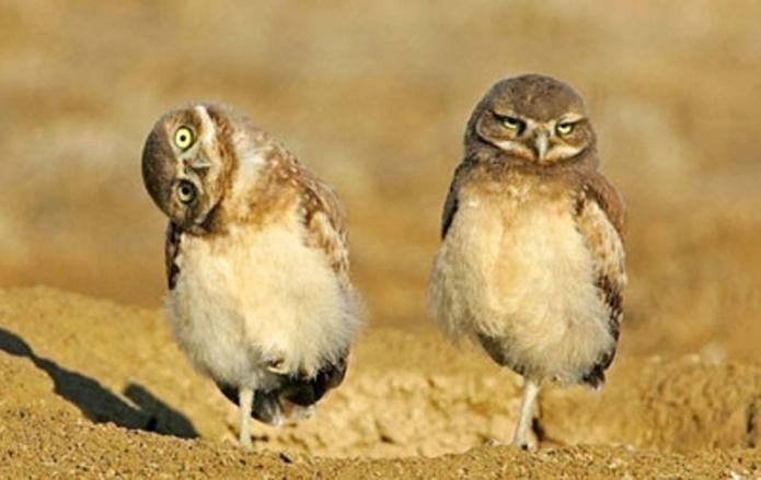 Cele mai inteligente păsări. Ce sunt?
