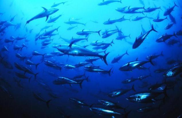 peștele din Marea Nordului