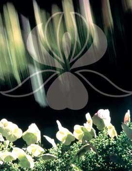 `Sisley` - cosmetice cu o reputație ideală