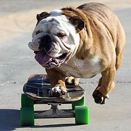 Cât costă un skateboard pentru un începător sau un călăreț profesionist