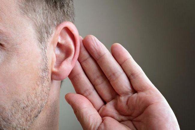 cum sunt legate ossicolele auditive