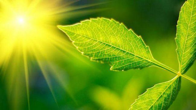 CO2 este necesar pentru plante