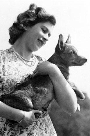 собака английской королевы порода фото