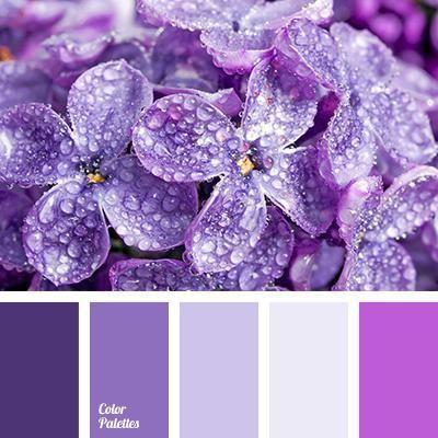 combinație de culoarea liliacului cu alte culori