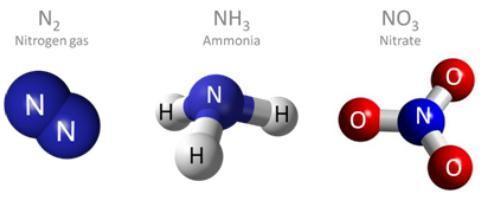 element chimic de azot