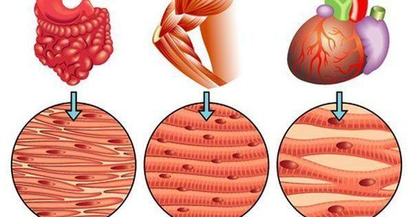 ce organe de tăiere