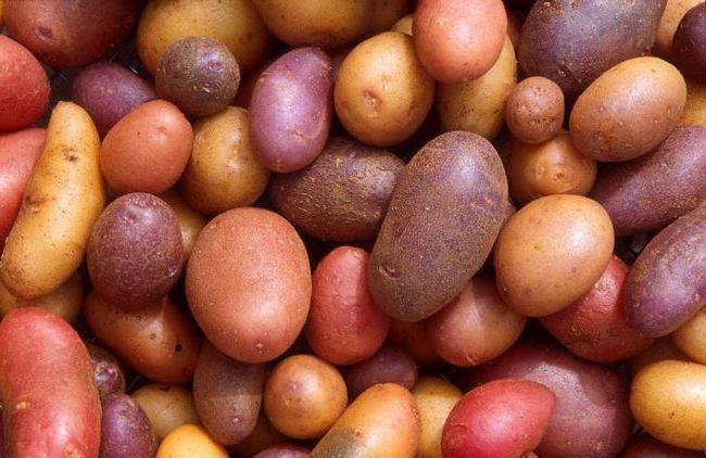 Soiurile de cartofi olandezi