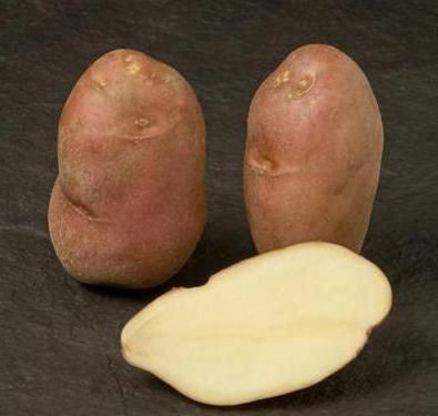 cartofi de cartofi