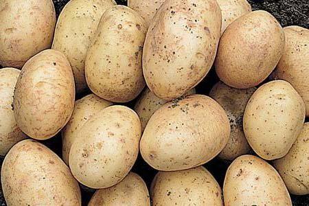 Cartofi olandezi