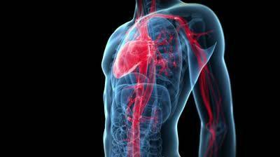 compoziția și funcția sistemului sanguin