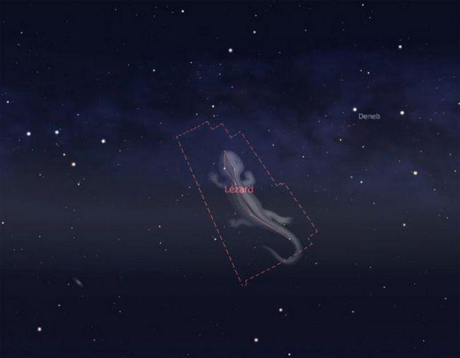 Constellation Lizard Photo