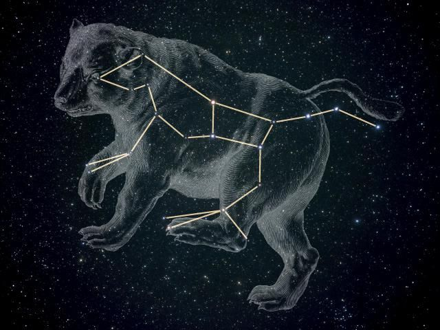 constelația ursului