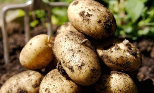 Aurora imagini cu cartofi