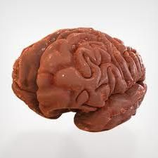 structura creierului uman