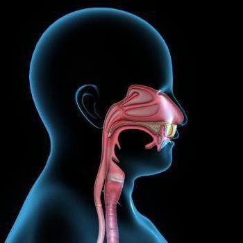 structura gâtului și a laringelui
