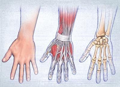 structura anatomică a mâinilor