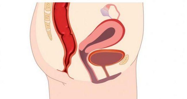 structura labiilor