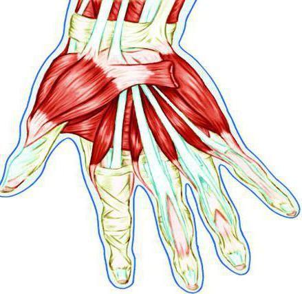 tendonul mâinii