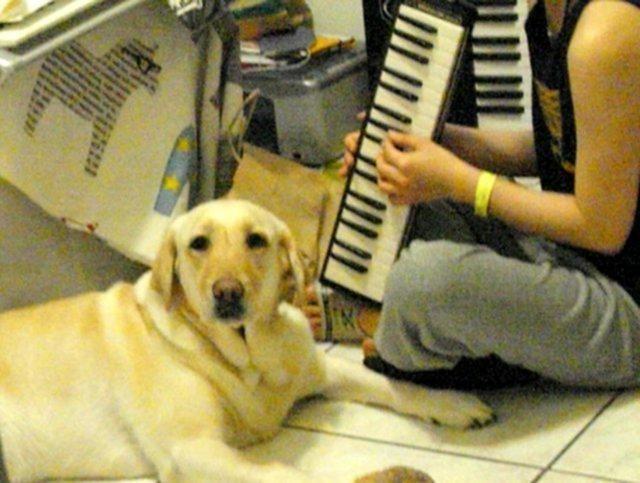 dezvoltarea audiției muzicale la copii