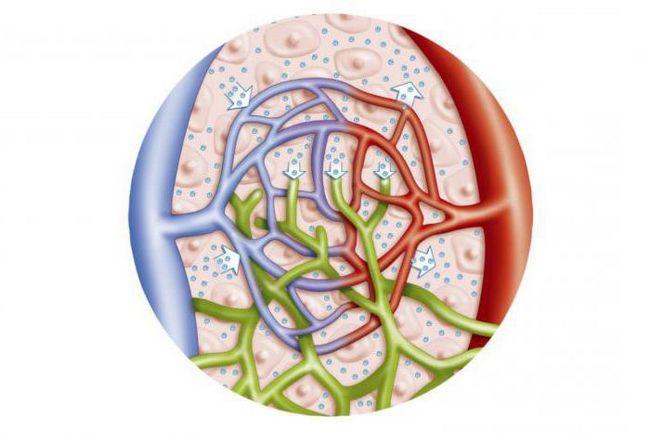 schema de formare a fluidului tisular și a limfei