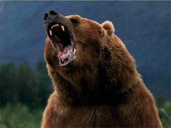 Lumea animală minunată: cele mai periculoase animale ale planetei