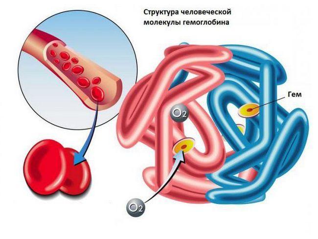 ce element urinar este o parte a hemoglobinei eritrocitelor
