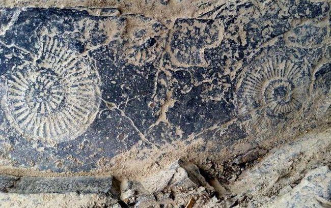 Fotografia de extincție Permian
