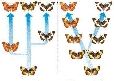 simpatic speciation
