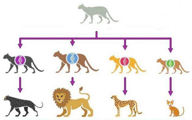 procesele de speciație