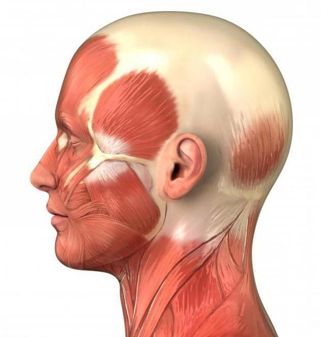 tipuri de țesut muscular uman
