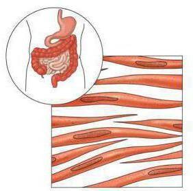 tipuri de modele de țesut muscular
