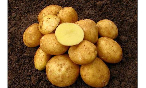 vin varietate de cartofi