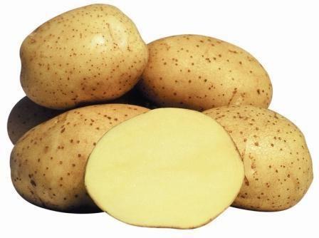 varietate de cartofi de viță de vie fotografie