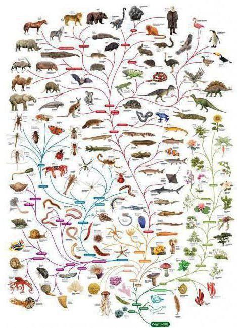 ce contribuție a făcut biologia lui Darwin