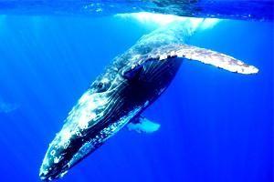 unde locuiește balena