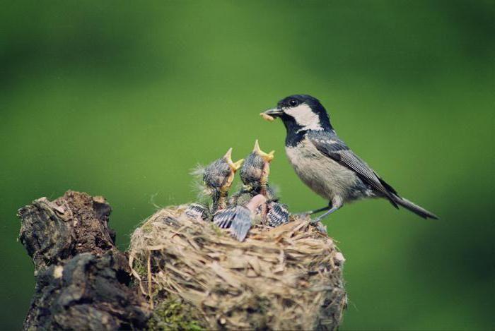 внутренние органы внутреннее строение птиц