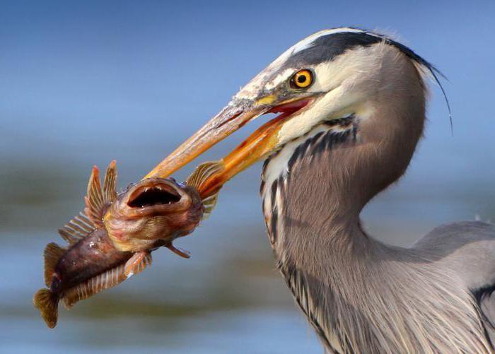 внутреннее строение и размножение птиц
