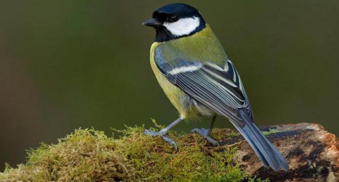 внутреннее строение птиц биология