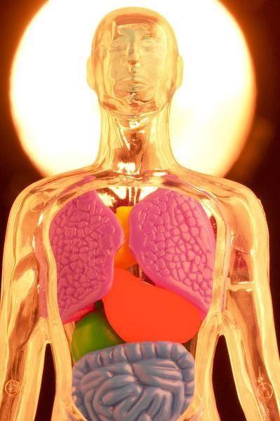 Mediul intern al corpului