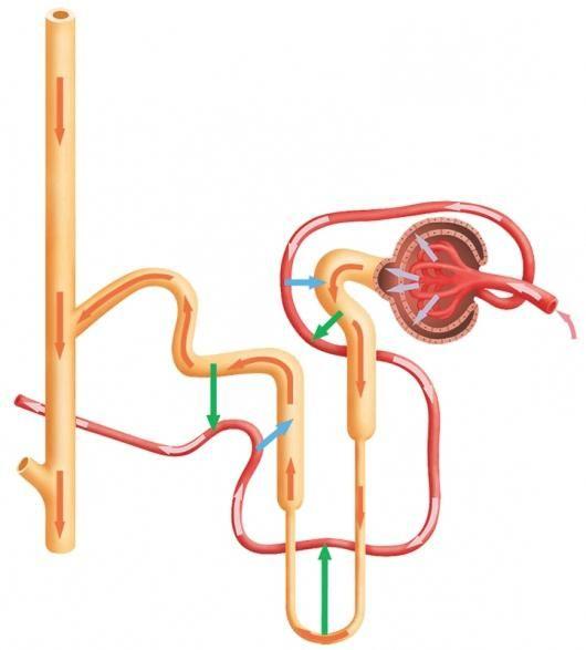 Mediul intern al corpului uman