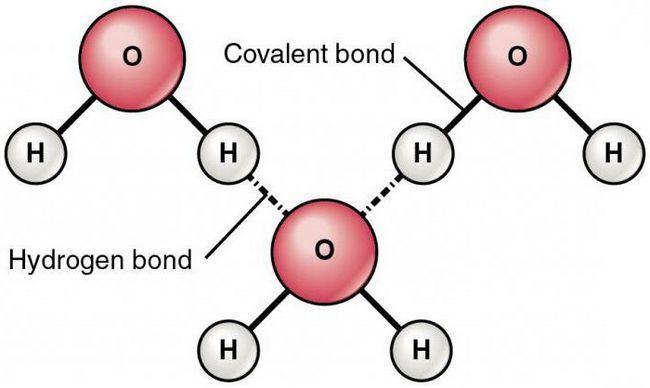 legăturile de hidrogen