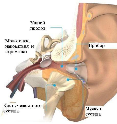 Articulația temporomandibulară. Inflamatia. simptome