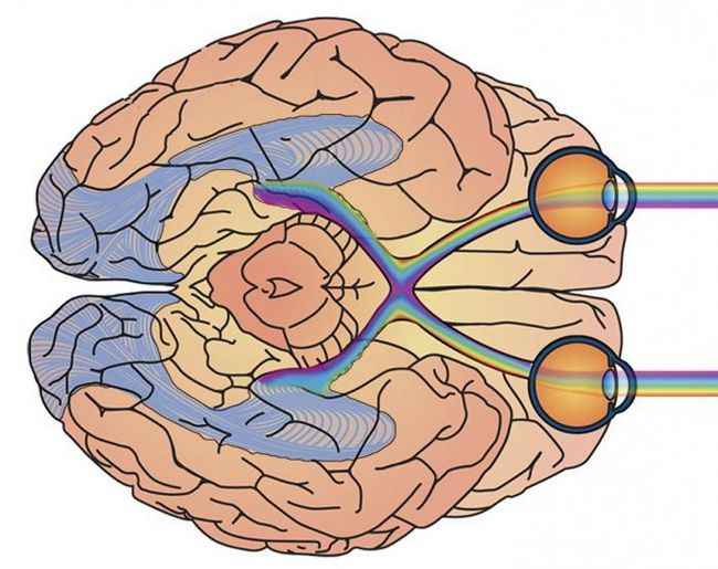 percepția culorii de către om