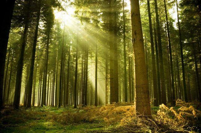 Pădurea - plămânii planetei