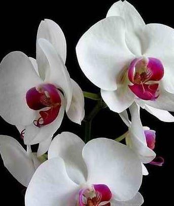 Orhideele ce să facă când înflorește