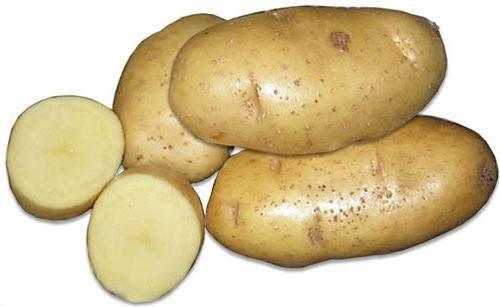 descrierea varietății de cartofi a clasei