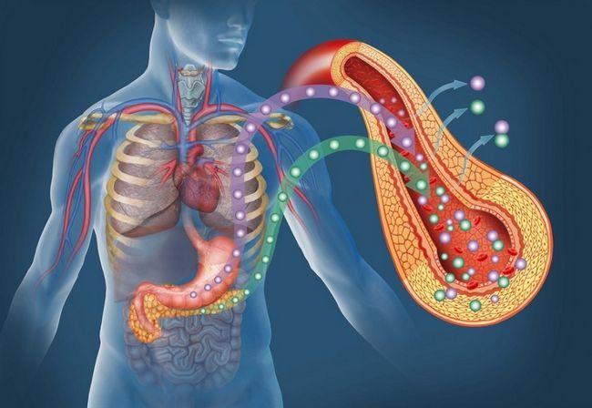 Pancreas semne